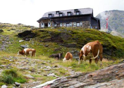 Berghut Oostenrijk
