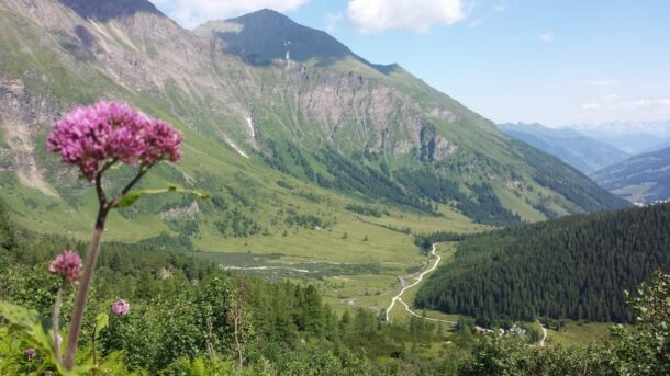 flora en fauna in de bergen